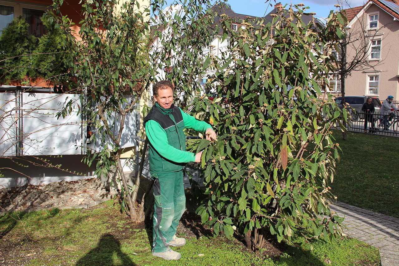 Antonio Falconieri - Vorarbeiter für Pflegearbeiten, Bepflanzungen und Pflasterarbeiten