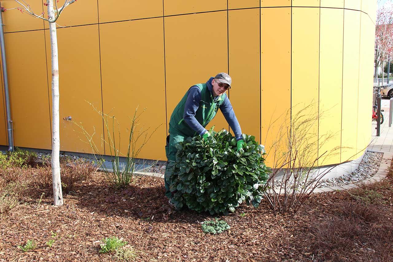 Cedomir Zablecanski - Vorarbeiter für Pflegearbeiten und Bepflanzung
