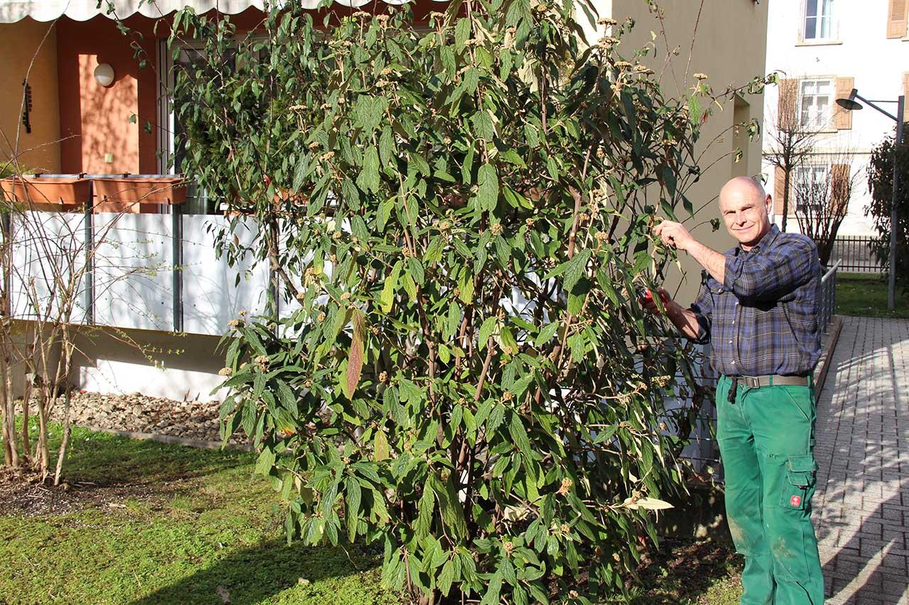 Oliever Meyer - Vorarbeiter, Meister für Pflegearbeiten und Bepflanzung